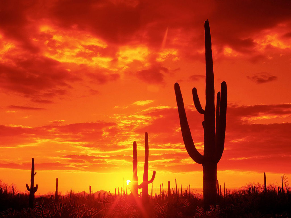 cactuses_sunset_photo.jpg