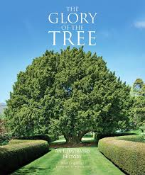 glory of the tree.jpg